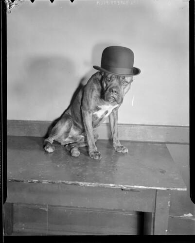 dogs bowlerhats lesliejones