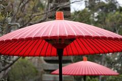 (eyawlk60) Tags: favorite japan canon garden cherry eos japanese spring kyoto   5d nippon   flickraward   gettyimagesjapan12q2