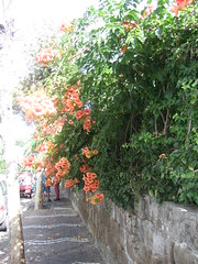 "Flowers of Sorrento • <a style=""font-size:0.8em;"" href=""http://www.flickr.com/photos/46611557@N06/7090764587/"" target=""_blank"">Abrir todas no Flickr</a>"