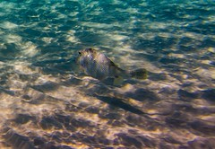 Grand Cayman (Ricymar Photography(Thanks Everyone!!!!)) Tags: ocean desktop sea wallpaper fish art photography screensaver martha background fine ricardo royalcaribbean mangual underwaters ricymar ricymarfineartphotography