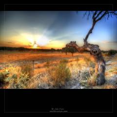 (Julio_Castro) Tags: sunset sun sol arbol atardecer nikon puestadesol extremadura plasencia 2470f28 encarretera nikond700 juliocastro rememberthatmomentlevel1