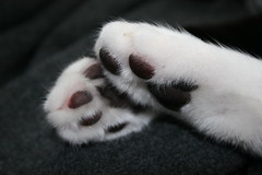 paws (Judy **) Tags: cat kat soft paws poes 2012 pootjes zacht 112pictures