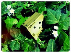 Danbo in the Ivy (ghostsecurity28) Tags: flower leaves fun toy toys robot petals spring flora creative may boredom imagine imagination danbo revoltech danboard