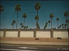 palms 5132221 (m.r. nelson) Tags: arizona urban usa southwest america az americana mesa urbanlandscapes artphotography mrnelson newtopographic markinaz nelsonaz