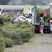 Donne scaricano Alfalfa (Mercado indigeno di Saquisilí)
