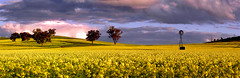 Windmill in canola (Andrew Fleming Photography) Tags: sunset windmill australia andrew victoria hills dookie canola fleming andrewfleming goulburnvalley centralvictoria greatershepparton