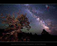 Ancestors Speak (Goldpaint Photography) Tags: oregon galaxy nightsky badlands milkyway junipertree