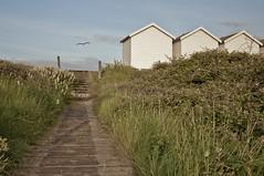 Flying Low (Mitch Rees) Tags: sea sky beach seagull boardwalk beachhuts hpad