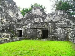 Calakmul (Edna aam) Tags: naturaleza planta mxico paisaje rbol airelibre calakmul zonaarqueolgica