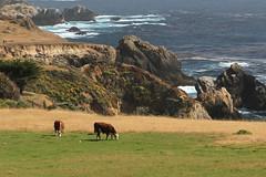IMG_9957c2 (Steve Perdue) Tags: california coast bigsur perdue