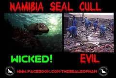 wicked evil (The Seals Of Nam) Tags: ocean africa tourism paradise waves safari dolphins seals sharks whales namibia aphrodisiac etosha cruelty windhoek taiji thecove beastiality capecross caprivi animalwelfare kimkardashian justinbieber namibiasealhunt
