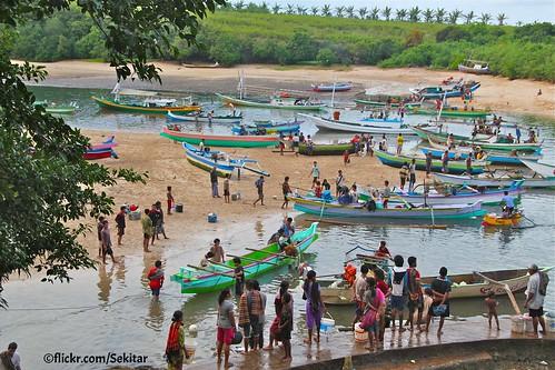 Busy morning at Pero fishing harbour, Sumba Barat