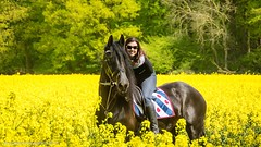 Bella Donna (Roy Debets) Tags: horse fries paard frisian