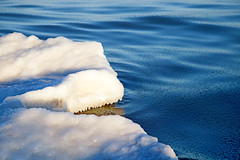 Part of the ice floe in the sea under the sun (garry0305) Tags: ocean blue sea sunlight snow texture ice nature landscape outdoors frozen frost natural background north freeze
