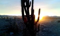 Desierto de Atacama - Chile (Valentina Snchez) Tags: cactus sun beautiful countryside desert atacamadesert