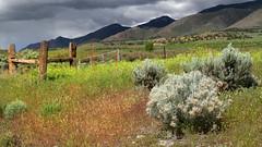 Fenced Rain (arbyreed) Tags: storm rain clouds fence brush sage darkclouds hff juabcountyutah arbyreed fencedfriday