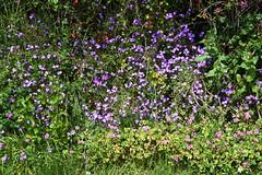 DSC_1189 Tilehurst (PeaTJay) Tags: flowers trees plants macro nature gardens fauna outdoors reading flora parks micro closeups berkshire bushes calcot tilehurst nikond750