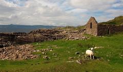 Applecross (Begoa Fernndez) Tags: costa coast scotland sheep escocia oveja torridon applecross culduie