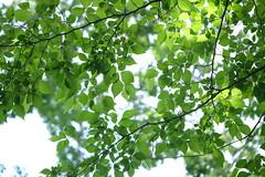 2016_0508_11553200 (m ito) Tags: green japan 35mm creator zhongyi f20 352