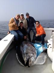 Anglų lietuvių žodynas. Žodis bluefin tuna reiškia tuno lietuviškai.