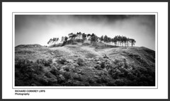 Summit Meeting (Chalky666) Tags: trees mountain tree mono scotland highlands argyll fir bute