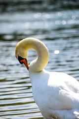 High Park Toronto (JiBs.) Tags: summer toronto canada water swan nikon highpark 28 fullframe fx d610 70mm200mm