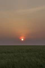 Pastel Sunset (JodBart) Tags: winstanley billinge fields wheat sunset sky