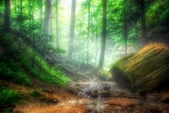 Serene Forest (Imagery By Antonio) Tags: ohio usa rock fog by forest landscape outdoor hills ash cave antonio hocking imagery gumm gumm238