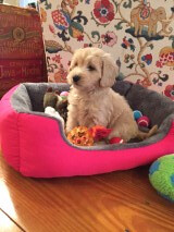 Lucy Lu's Dusty loves her new bed!