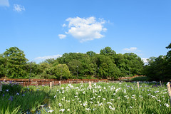 7Yamada Pond Park (anglo10) Tags: flower japan