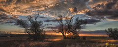 Sundown (southern_skies) Tags: light sunset cloud tree grass seedhead darlingdowns pepperina