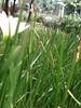 bunga (daEsUke_cHan) Tags: background jakarta ban taman daun fotografi pemandangan fotofoto burung menteng penghijauan kumpulkumpul rangkabunga
