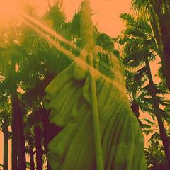 Treedom (Lliesse) Tags: summer orange sun tree marie square de fun liberty freedom soleil solar artwork election cannes no cd flag fear azure free warp vert cte pop palm tape burn cover libert lp flare stray format burst rayon foyer ep palmier azur marian drapeau strays carr dazure dgrad lection vinyle solarisation transfert strok liesse treedom daruz lliesse solargaze mimont