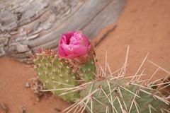 canyonlands nationalpark (ingejahn) Tags: usa utah canyonland canyonlandnationalpark usa2012