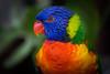 Les couleurs de la nature (Osbern) Tags: animal zoo normandie parc oiseau couleur arcenciel coloré perroquet zoologique cerza hermival lorique