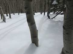 Snow shadows...