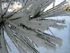 IMG_0284 (sandaxel) Tags: white heavysnow georgewythstatepark winter2010