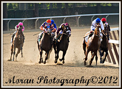 Metropolitan Mile (EASY GOER) Tags: park horses horse ny sports animals racetrack canon belmont tracks competition racing 7d athletes races equine thoroughbreds equines metmile metropolitanmile