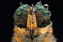 dew on me (shikhei) Tags: finest flickrs images1 fantasticnature specialpicture buzznbugz