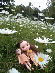 Daisy Sisters (first)
