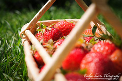 A Basket Of Strawberries (Day 15/30) (Evelina L. Photography) Tags: red summer favorite green nature colors grass june fruit project garden ilovenature fun happy yummy strawberry basket yum sweet strawberries friday homegrown 2012 fuits ilovesummer summer2012 evelynheartsphotography