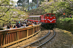 Make a Turn (Singer ) Tags: light shadow plant flower tree composition train canon 50mm iso100 taiwan railway tourist f45 singer sakura cherryblossoms passenger  curve     w