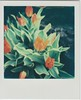 Tulips (ifleming) Tags: polaroid sx70 cumbria sonar grangeoversands impossibleproject 600colour