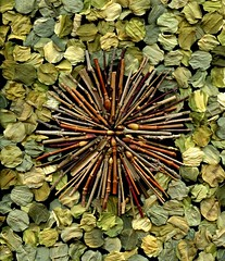 55830.01 twigs (horticultural art) Tags: circle circles mandala dried hosta twigs starburst horticulturalart