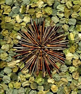 55830.01 twigs