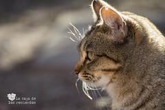 Mirada Perdida-0140 (Oscar Tomás) Tags: cat feline gato felino miradaperdida blankstares lacajadelosrecuerdos
