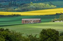 The Barn (paulinuk99999 - just no time :() Tags: england green english yellow barn vintage landscape countryside buckinghamshire hill fields beacon maize ivinghoe enlish paulinuk99999 sal70400g niceicecream