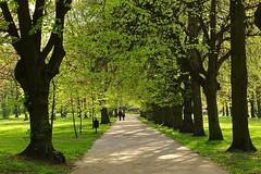 spring in the park (JoannaRB2009) Tags: parkimksiciajzefaponiatowskiegowodzi park alley avenue trees spring people couple nature green light shadow walk path city d lodz dzkie lodzkie polska poland