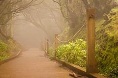 niebla en el bosque (inma F) Tags: arbol bosque lasmercedes anaga