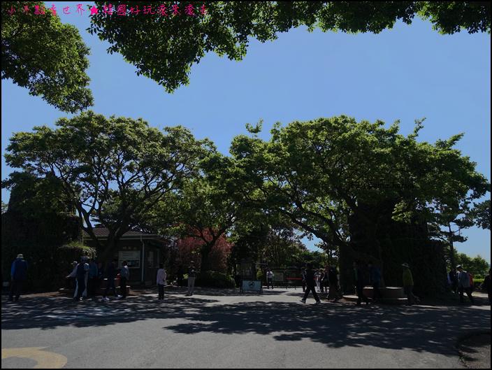 濟州山茶花庭院 (5).JPG
